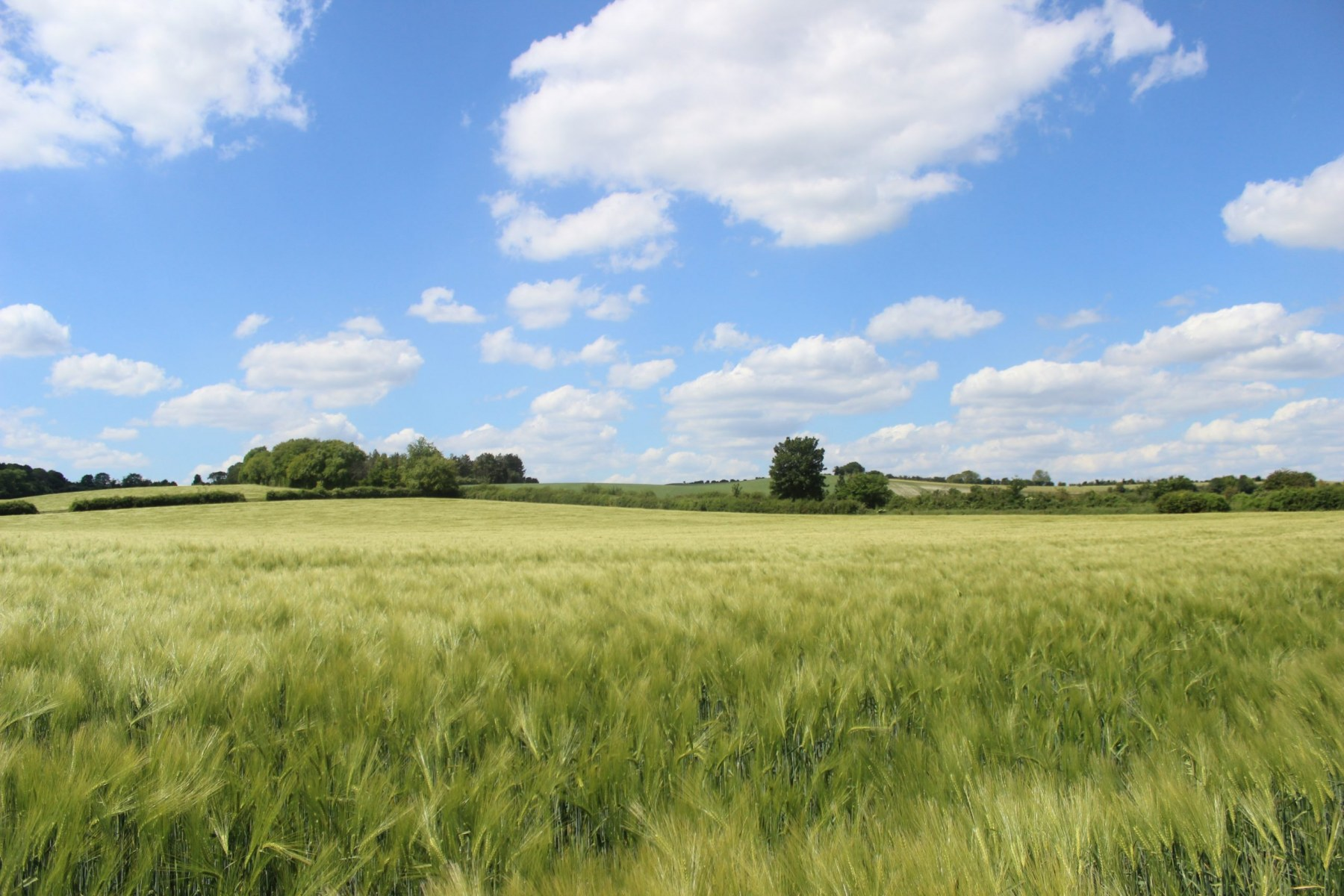 Wheat Field Pirton